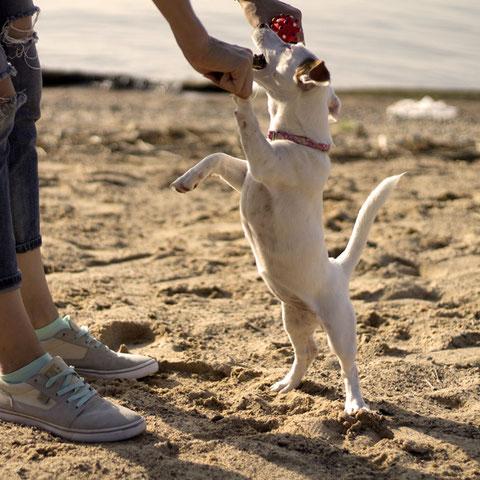 Hundesnacks, Leckerlis für Hunde zur Belohnung, zuckerfrei, getreidefrei