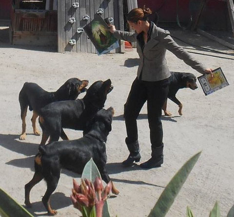 Practicando magia con Merlin, entrenando a los perros de mi hermano
