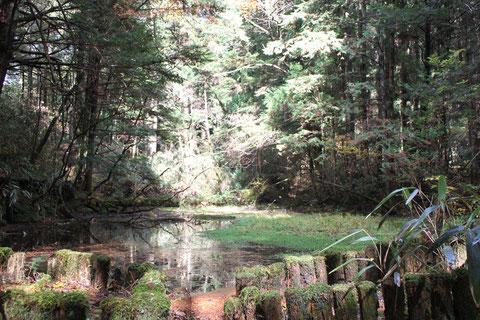 野底山池の平 モリアオガエルの池