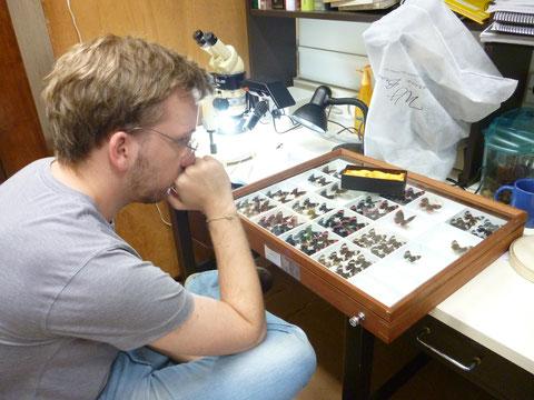 Estudia el Genero Telemiades (Hesperiidae)
