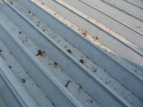 鉄製屋根塗り替え前状況。ポツポツとさびが発生しております。