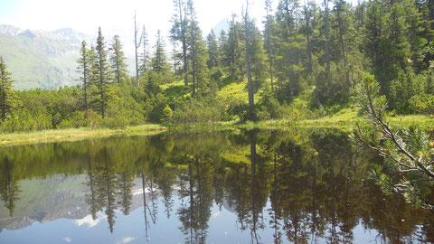 Natur pur : Wiegenwald, 1650m, ca 1- 2 Std.