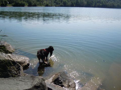 500 m von uns und dann das.. Badespaß für Mensch und Hund..