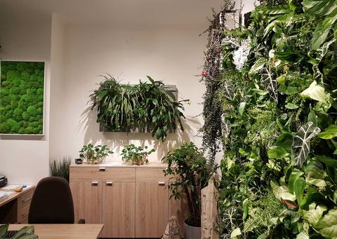 Pflanzen Wand: vertikale Begrünung - Grüne Wände - Ammon KG ...