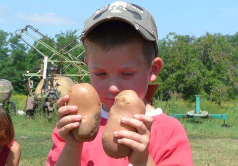 Adam bei der Kartoffelernte 2008