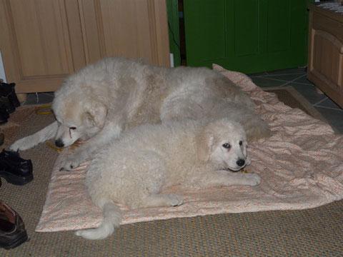 Arthur und Lajka (12/2009)