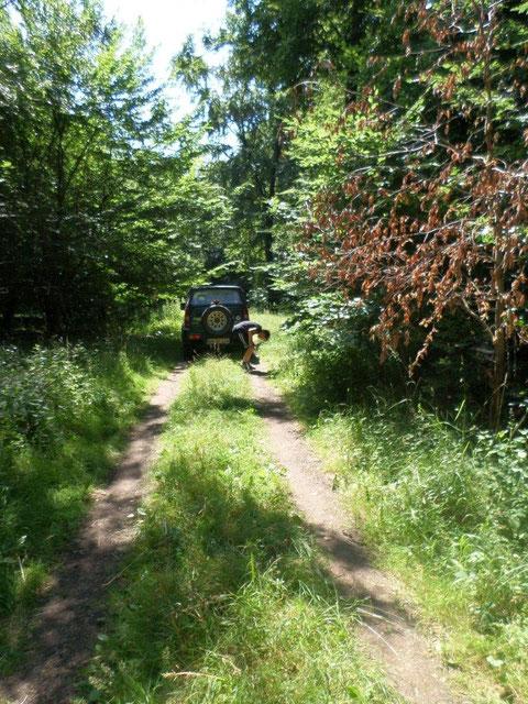 La route forestière qui passe à proximité du lieu du crash