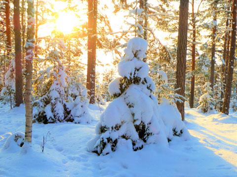 Winterlandschaft Finnland Silvester