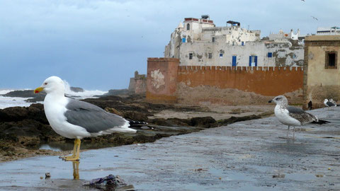 Le bec au vent sur le port d'Essaouira