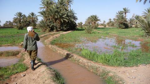 Travail de la terre dans la palmeraie de Mhmind