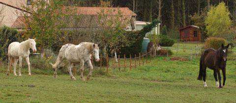 2012: Pension vacances pour un groupe de 3 chevaux.