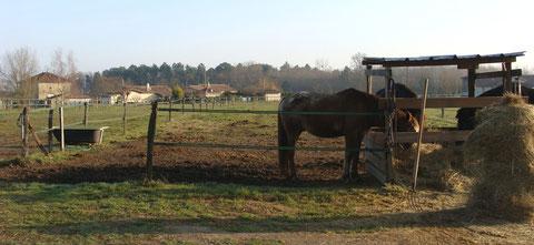 Hiver 2012: vue des parcs d'hiver capacité 2 chevaux.