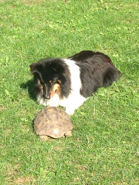 BraveBanja 19 Monate beim Schildkrötenhüten