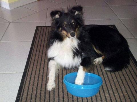 Brandy, 8 Monate wartet auf das Abendessen