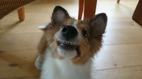 Schöne Zähne :-) so süß der kleine ChiliChips