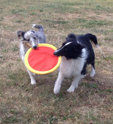 Zu zweit ist Frisbee spielen noch schöner