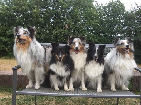 Die B'chen vom Nixenteich: Benito, Brandy, BellyButton, Mama Ally und Benji