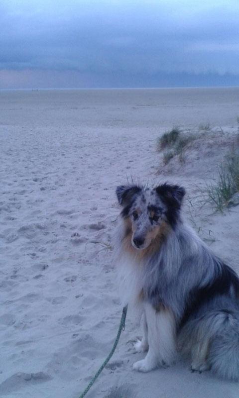 Benito an der Nordsee.  Mein kleiner Seehund ☺️