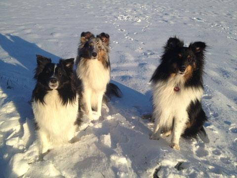 Ally, Belly Button und Brave Banja der ein paar Tage zu Besuch bei uns bleiben darf :-)