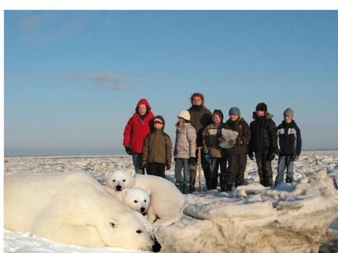 Eisbären in Finnland