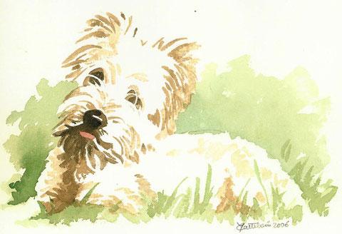 portrait aquarelle d'un chien blanc