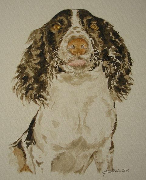 aquarelle de la chienne Flossie