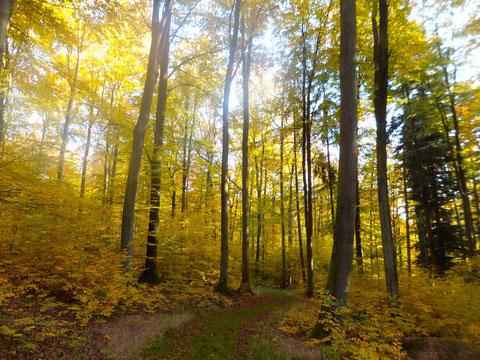 Goldener Herbst - Herrliche Landschaften laden zum Spazieren ein!