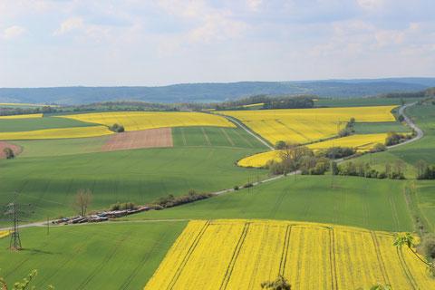 Die Rappsfelder im Frühjahr einzigartig