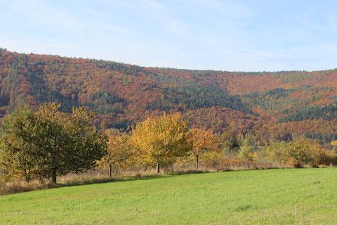 Bad Bocklet ist umgeben von herrlichen Mischwäldern, die sich im Herbst einzigartig verfärben.