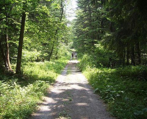 Wir wäre es mit einer Wanderung in unseren schönen Wäldern.