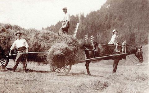 Raccolta del fieno alla Tornaz negli anni 1910-1920