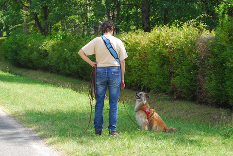 """Discussion"" entre le conducteur et son chien"