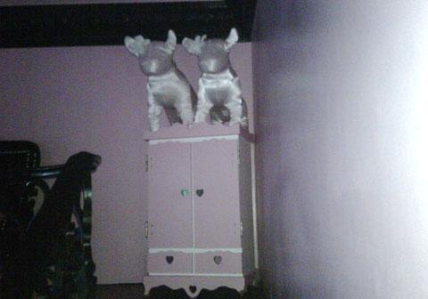 Foto del armario para sus perros de raza chihuahua