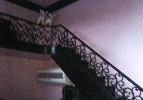 Foto de la escalera de caracol y aire acondicionado para sus amados chihuahuas