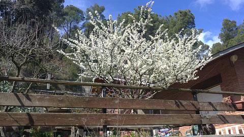 Se nota que llego la primavera.