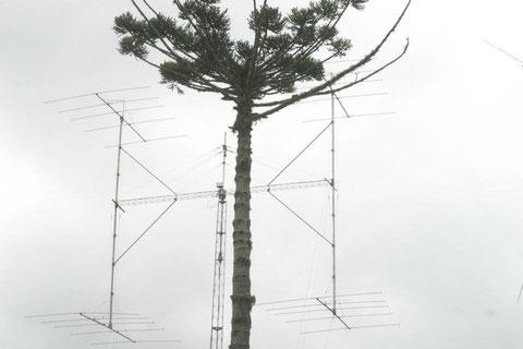 El arbol tambien hace de antena?