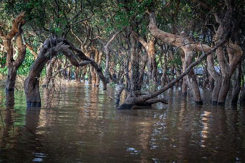 Las marcas de barro en los árboles delatan hasta donde llega el nivel de agua
