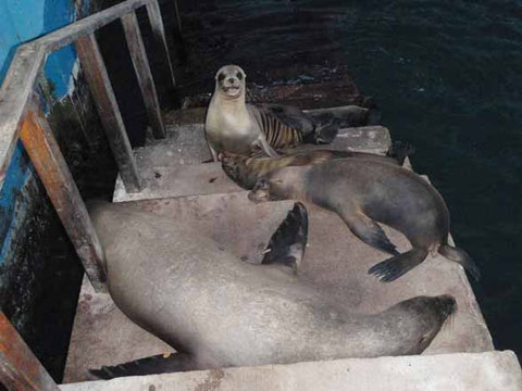 comité d'acceuil aux Galapagos