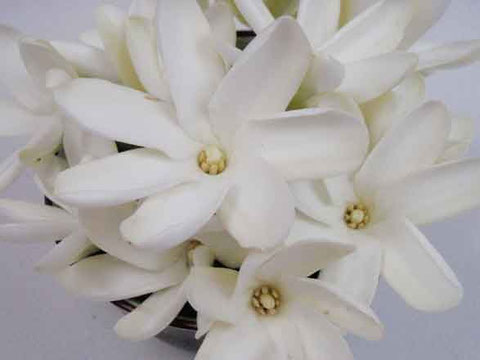 fleurs de tiare