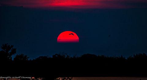 tramonto in laguna di grado