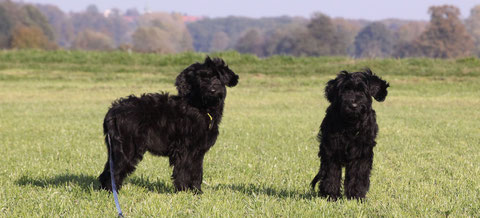 Yelli (links im Bild) / Greeny (rechts im Bild)