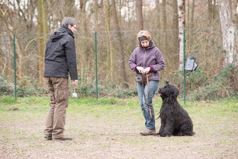 Foto: Mustafa Irmak / Positive Dog Academy