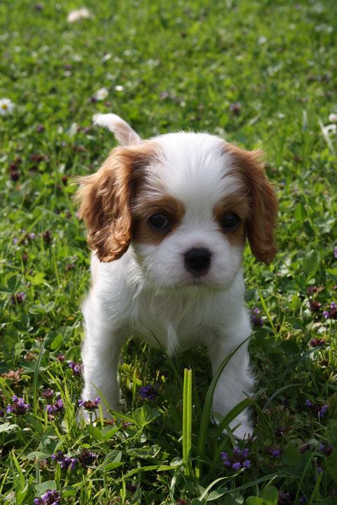 Belle (Kleo)