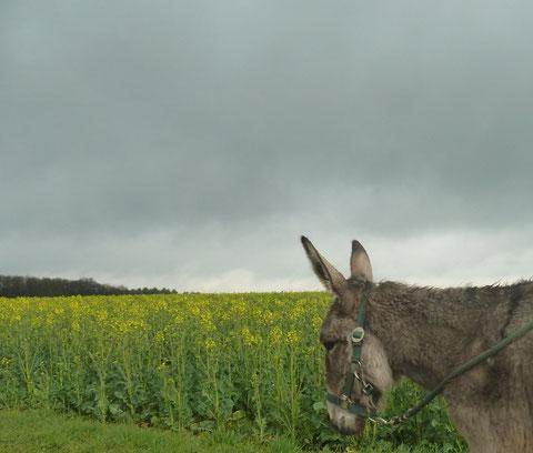Randonnée Hunsdorf 22.04.2012