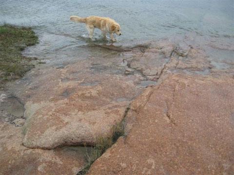 Der kleine Caruso beim stromern am Felsenstrand der Alandinseln