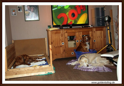 Ein Blick ins Goldentolling Wohn- (Hunde) -Zimmer
