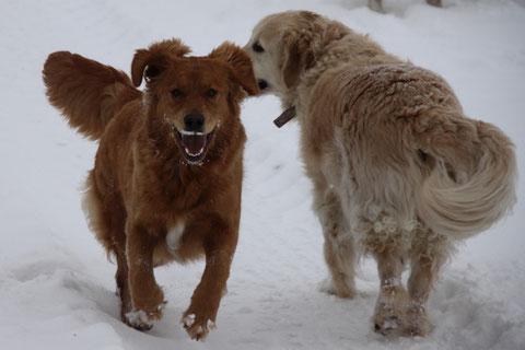 Aggy & Luna. Schnee bringt Laune!