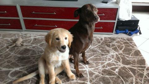 Hier mal ein aktuelles Bild von Lotta und ihrer liebsten Freundin Kira.