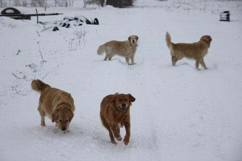 Alle zusammen im Schnee
