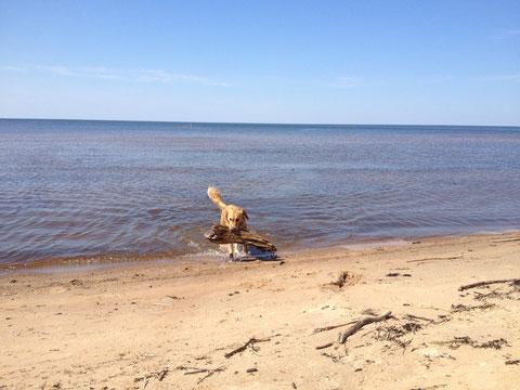 Ein Bad in der Ostsee